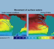 ElNino_0002_1024px-Movement_of_surface_waters_during_El_Nino copia